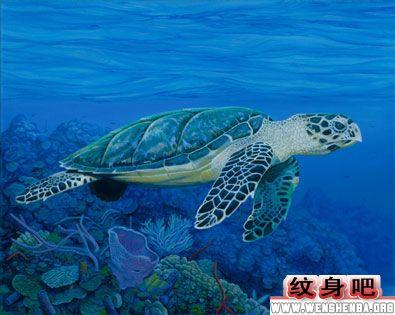 海龟纹身图案